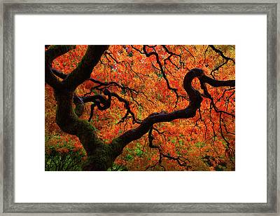 Fall Chaos Framed Print by Darren White