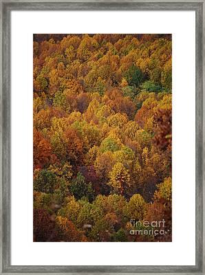 Fall Cluster Framed Print by Eric Liller