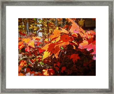 Fall Color 2 Framed Print by John Julio