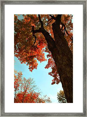 Fall Color 2010 No 3 Framed Print