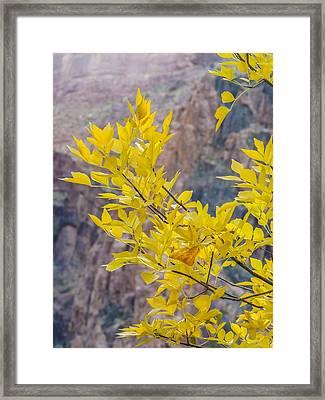 Fall Color At Phantom Ranch Framed Print by NaturesPix