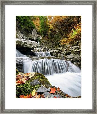 Fall Color Bash Framed Print