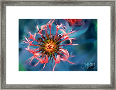 Fall Color Button Framed Print