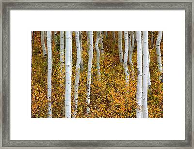 Fall Color Framed Print by Dori Peers