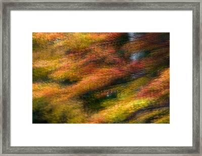 Fall Color Impressions Framed Print