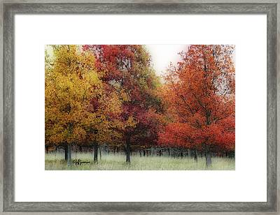 Fall Color Framed Print by Jeff Swanson