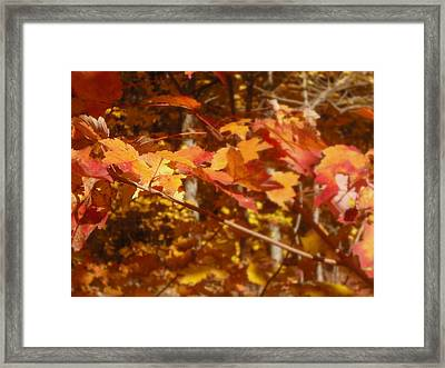 Fall Color Framed Print by John Julio