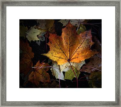 Fall Color Series II Framed Print