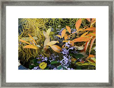 Framed Print featuring the photograph Fall Color Soup by Deborah  Crew-Johnson