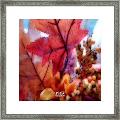 Fall Colors # 6059 Framed Print by Barbara Tristan