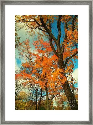 Fall Colors 2 Framed Print by Marjorie Imbeau