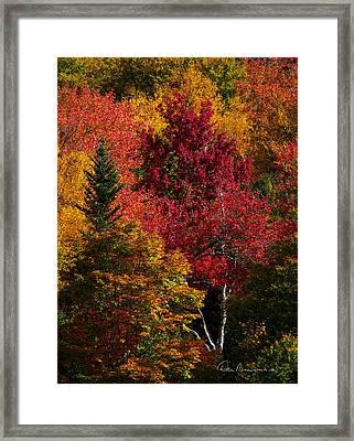 Fall Colors 8743 Framed Print