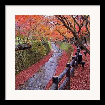 Surrounding Wall Framed Prints