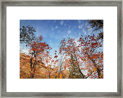 Fall Colors Along West Fork Trail Framed Print by Kunal Mehra