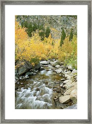 Fall Colors And Rushing Stream - Eastern Sierra California Framed Print by Ram Vasudev