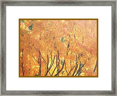 Fall Colors At Cape May Framed Print by Eric  Schiabor