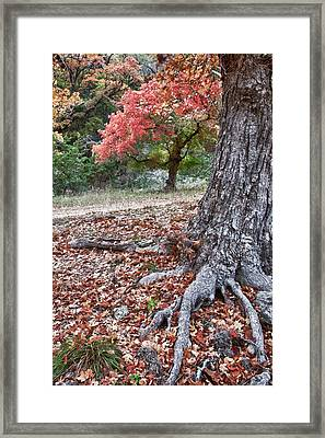 Fall Colors At Lost Maples Framed Print