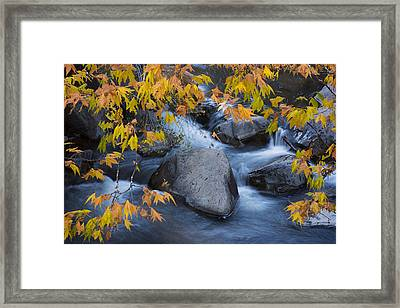 Fall Colors At Slide Rock Arizona Framed Print by Dave Dilli