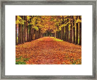 Fall Colors Avenue Framed Print