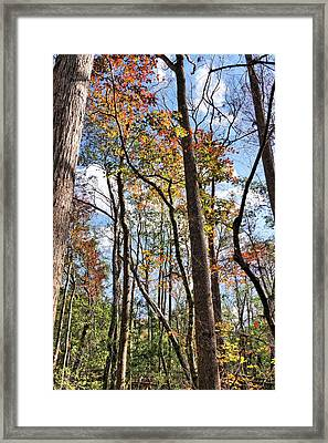 Fall Colors In A Florida Forest Framed Print by John Trommer