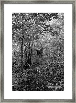 Fall Colors In Bw Oberg Mountain North Shore Minnesota Framed Print