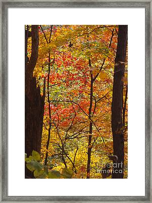 Fall Colors In Indiana Framed Print by Lowell Anderson