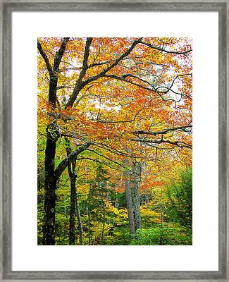Fall Colors In Maine 1 Framed Print by Jonathan Hansen