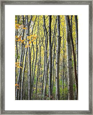 Fall Colors In Maine 2 Framed Print by Jonathan Hansen