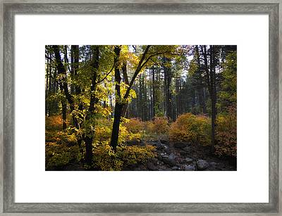 The Magical Fall Colors  Framed Print