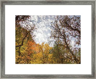 Fall Colors In The Desert Framed Print by Kunal Mehra