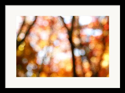 Abstract In Nature Framed Prints