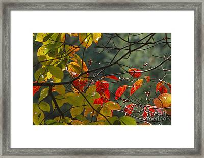 Fall Colors Framed Print by Lowell Anderson