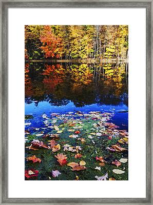 Fall Colors Near Bushkill Falls State Park Pa Usa Framed Print
