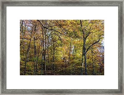 Fall Colors Of Rock Creek Park Framed Print