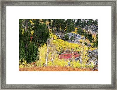 Fall Colors On Rocky Cliffs Framed Print by Mike Cavaroc