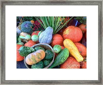 Fall Colors Pumpkins And Gords 1 Framed Print