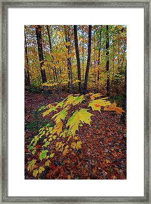 Fall Colors Framed Print by Rick Berk