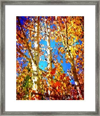 Fall Colors Framed Print by Sarah Jane Thompson