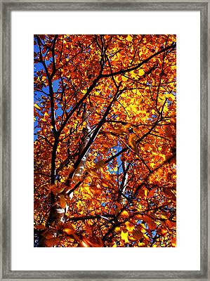 Fall Colours Framed Print