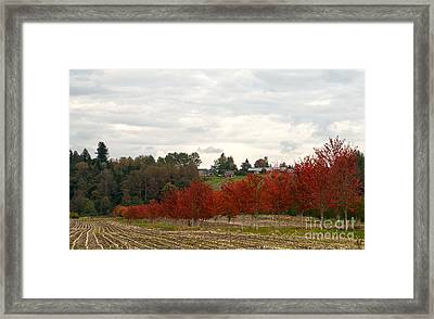Fall Country Framed Print by Victoria Harrington