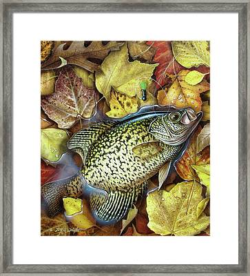 Fall Crappie Framed Print by JQ Licensing