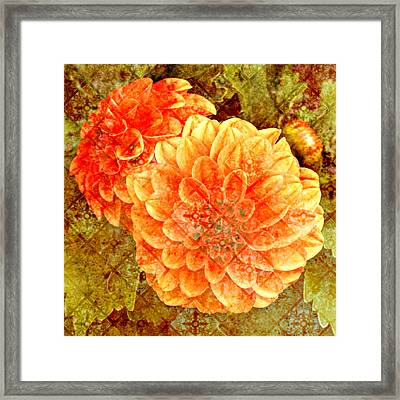 Fall Dahlias Framed Print