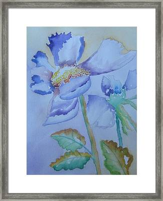 Fall Daisy Framed Print by Warren Thompson