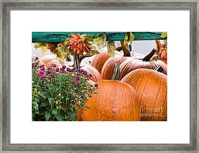 Fall Display Framed Print by Edward Sobuta