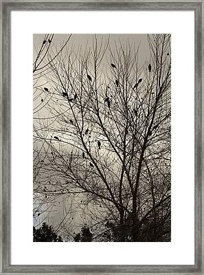 Fall. Evening.blackbirds. Framed Print by Viktor Savchenko