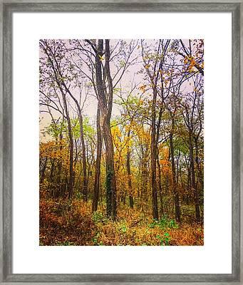 Fall Farewell Framed Print