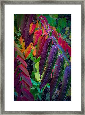 Framed Print featuring the photograph Fall Feathers by Kendall McKernon
