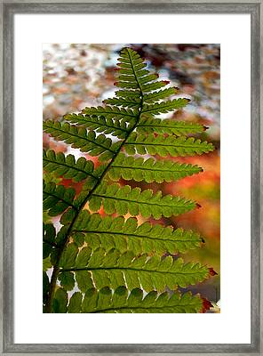 Framed Print featuring the photograph Fall Fern by Gwyn Newcombe