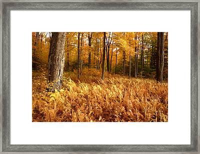 Fall Ferns Framed Print by Eric Foltz