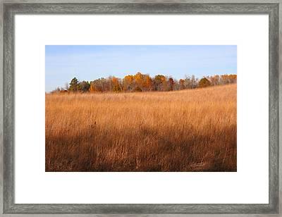 Fall Field Framed Print